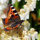 Butterfly by rosie320d