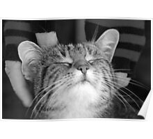 Cat with no hat Poster