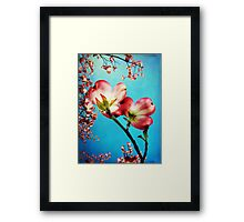 Blooms of the Dogwood Framed Print