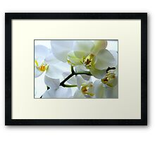 The Sparkle of Spring ^ Framed Print