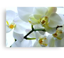 The Sparkle of Spring ^ Canvas Print