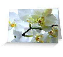 The Sparkle of Spring ^ Greeting Card