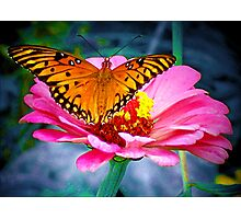 Welcoming Spring/Butterfly and flower Photographic Print