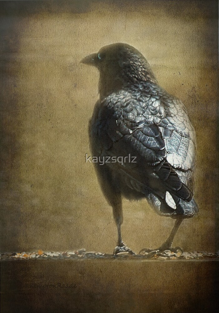 Ravens and Robins' Seeds by Kay Kempton Raade