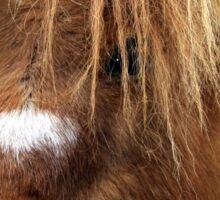Kerry Bog Pony Sticker