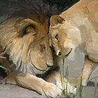 Lion Lovers by John Ryan