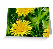Insect on dandelion Greeting Card
