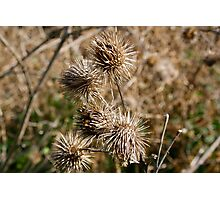 Spiky things! Photographic Print