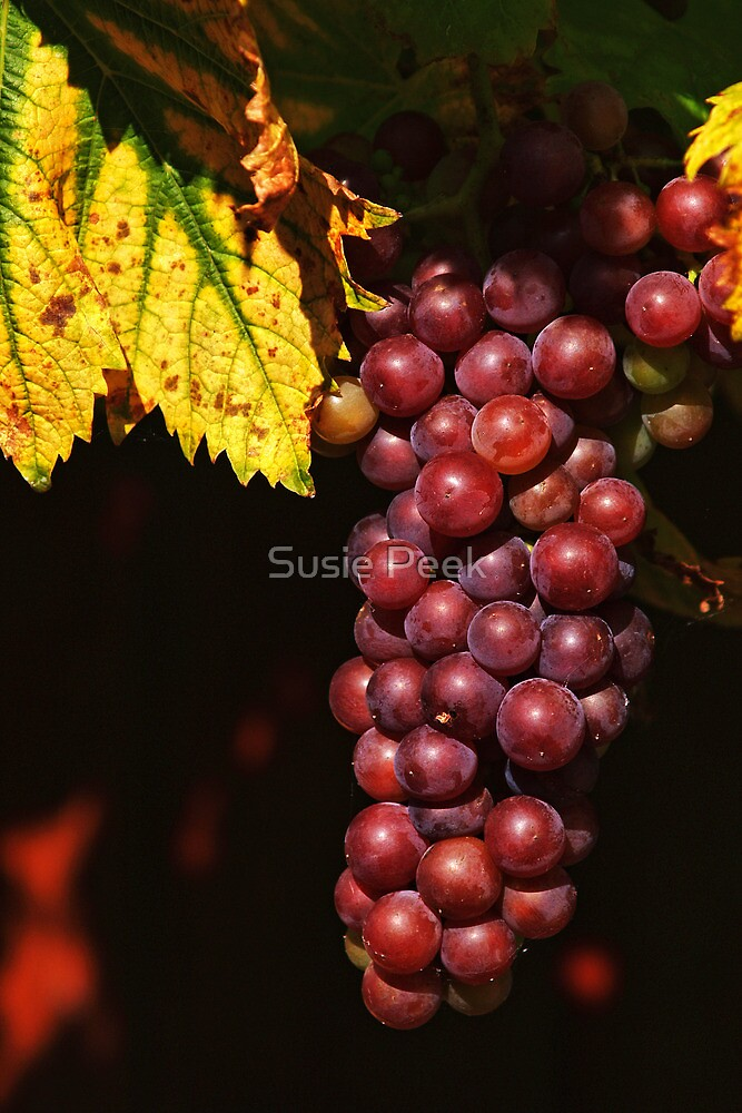 Ready For Harvesting by Susie Peek