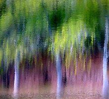 Spring Rain... by LindaR