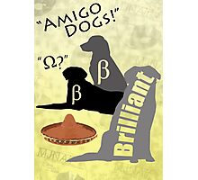 Amigo Dogs Photographic Print