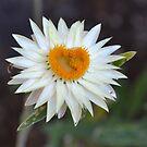 Heart Flower by TheaShutterbug