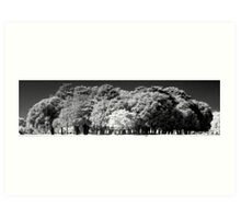 Phoenix Park Trees In Infra-Red Art Print