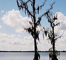 Two Trees. by Beth Mackelden
