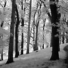 Dream Like Moment In Infra-Red, Phoenix Park by Dave  Kennedy