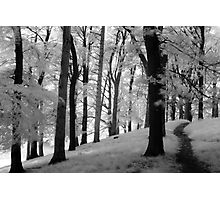 Dream Like Moment In Infra-Red, Phoenix Park Photographic Print