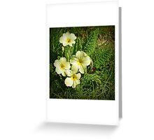 Spring Primrose Greeting Card