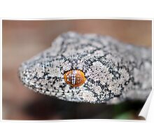 Southern Spiny-tailed Gecko - Portrait Poster