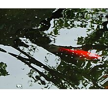 I ♥ Koi Photographic Print