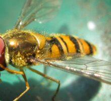 Hoverfly Summer Sticker