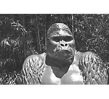 M'bongo, Zoo Memorial Photographic Print
