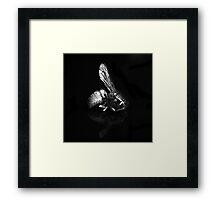 Dead Wasp Framed Print