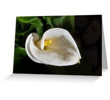 The Easter Lily Greeting Card