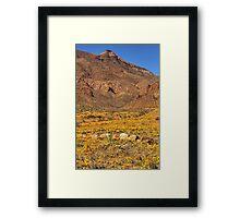El Paso's Annual Poppy Display Framed Print