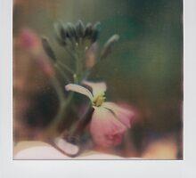 charlock by Jill Auville