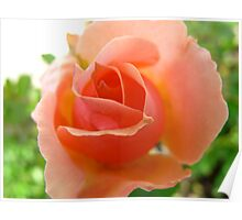 Expressive Peach Poster
