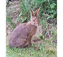 Hare Photographic Print