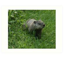 groundhog Art Print