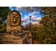 The Lion and the Lamp Post  Photographic Print