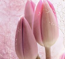 Pink Tulips by Elaine  Manley
