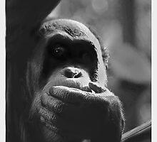 In the shadows of an orang by bluetaipan