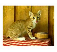 Growing up Happy/ Orange Tabby Kitten Photographic Print