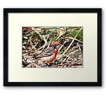Crimson Chat - Male Framed Print