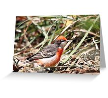 Crimson Chat - Male Greeting Card