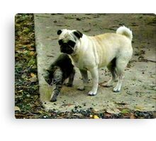 Showing The Way /Kitten and Pug  Canvas Print