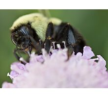 Bumble Bee At Work Photographic Print