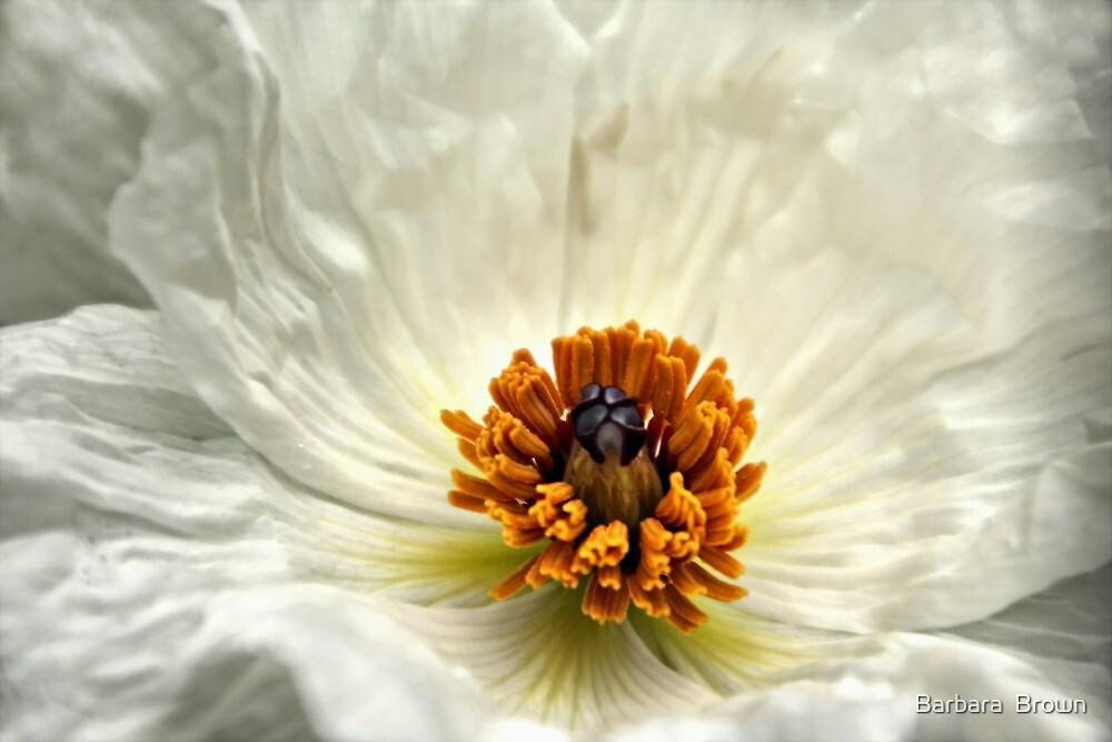 Silken Poppy by Barbara  Brown