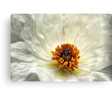 Silken Poppy Canvas Print