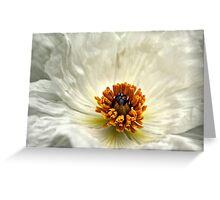 Silken Poppy Greeting Card