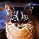Cats Eyes by Keri Harrish