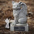 Roo's Angel Kitty by ibjennyjenny