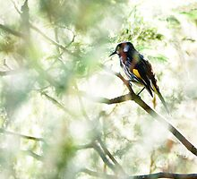 New Holland Honeyeater deep in the shade of the tree by Ron Co