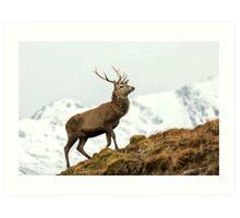 Red Deer Stag in Winter Art Print