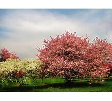 Spring-Arie den Boer Crab Apple Arboretum Photographic Print