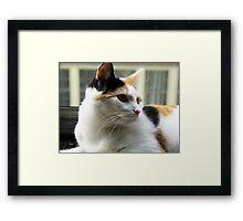 Precious Baby Kitty Face Framed Print