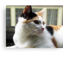 Precious Baby Kitty Face Canvas Print